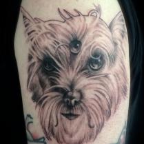 Brandon Dog