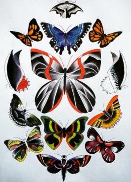 Butterflies new